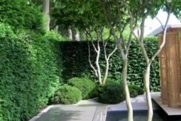 meerstammige-bomen