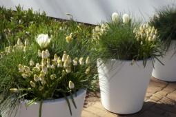 witte-bloempotten